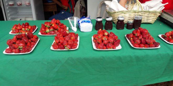 expo frutilla yaguaron